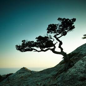 6-  Fotografías de naturaleza